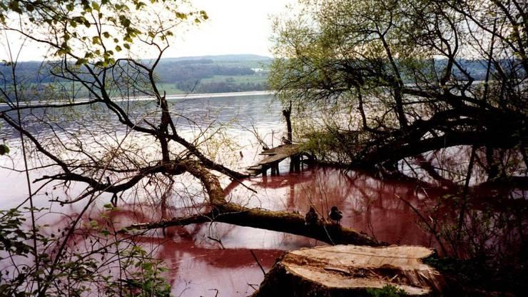 Die Burgunderblutalge färbte den Hallwilersee Anfang des Jahrzehnts jeweils rot ein.