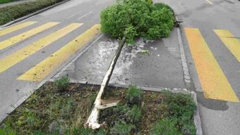 Diesen Baum fuhr die Lenkerin um.