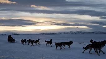 Viele Rennen mit Schlittenhunden mussten in Alaska bereits abgesagt werden, weil das Wetter derzeit viel zu warm ist. (Symbolbild)
