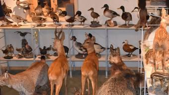 Die umfangreiche Sammlung umfasst über 200 Präparate.