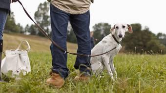 """""""Sitz, Platz, Warten"""": Der Bundesrat will die Kurse für Hundehalter beibehalten. (Archivbild)"""