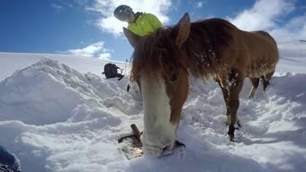 Rührende Rettung: Die beiden Snowboarder kümmern sich liebevoll um das hilflose Tier.
