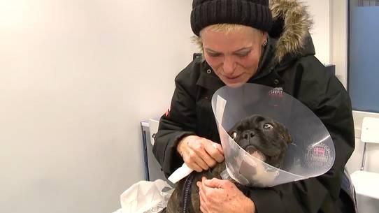 Diese Tränen gehören wohl zu den schönsten Momenten im Tierspital