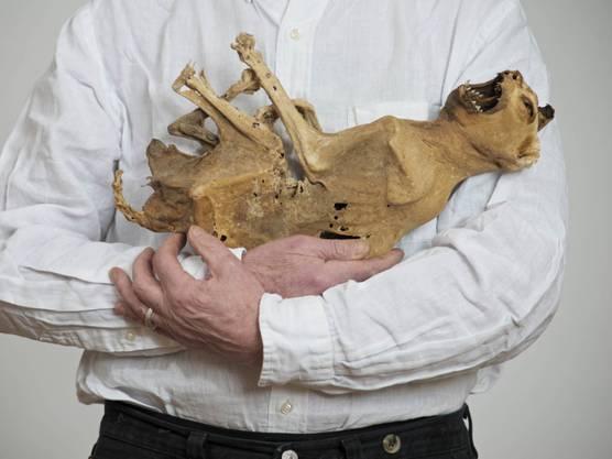 Katzenmumie aus dem 18. Jahrhundert: Fotografie von Lois Weinberger.