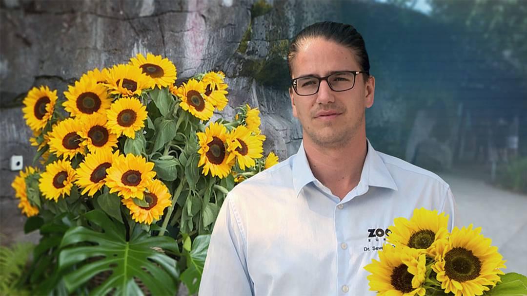 Nach Tiger-Attacke: Zoo Zürich gedenkt verstorbener Tierpflegerin
