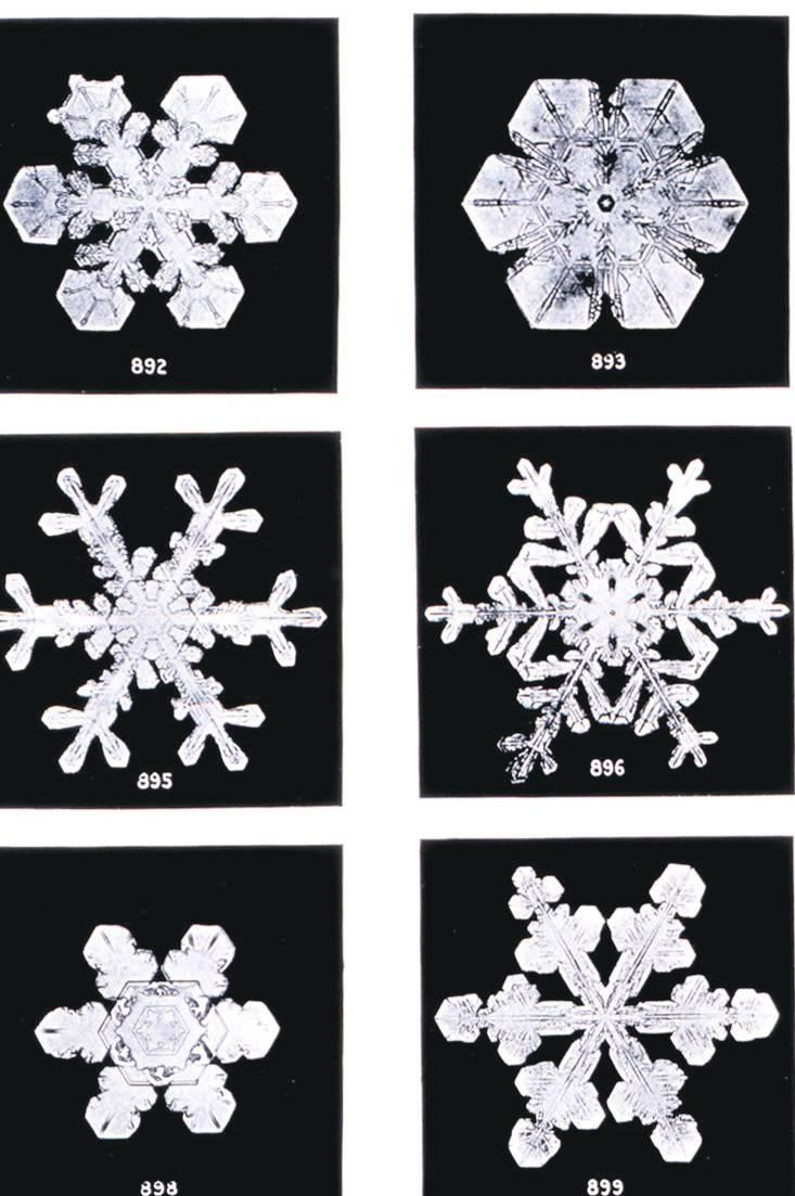 Schneekristalle, fotografi ert und  dokumentiert von Wilson Bentley.