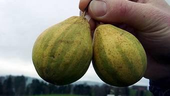 """Birnensorte """"Schweizerhose"""" ist die Obstsorte des Jahres 2011 (Archiv)"""