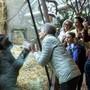 Menschen beobachten nach der Wiedereröffnung am Samstag die Gorillas im Zoo Zürich. Am Eingang war die Warteschlange teilweise länger.