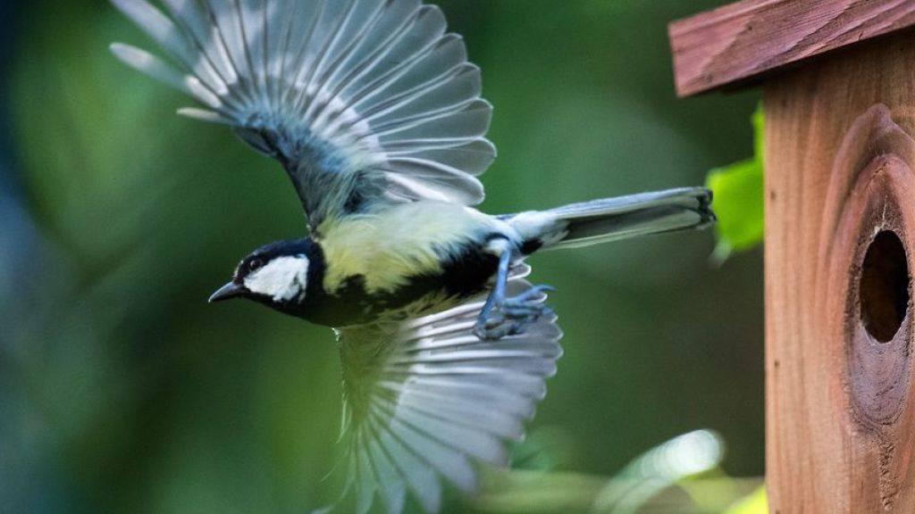 Vögel passen sich zu langsam an