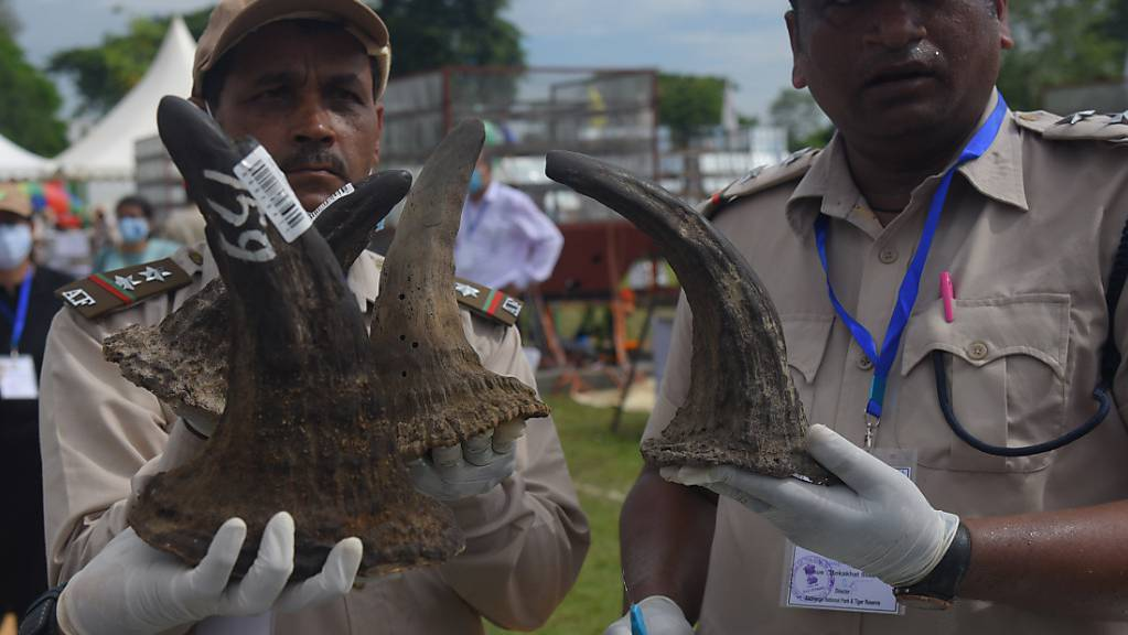 Als Zeichen gegen den illegalen Handel mit Nashorn-Hörnern haben indische Behörden 2489 alte Hörner verbrennen lassen. Damit machte die Regierung am Weltnashorntag am 22.09.2021 auf die Notwendigkeit aufmerksam, die bedrohte Tierart zu schützen. Foto: Dasarath Deka/ZUMA Press Wire/dpa