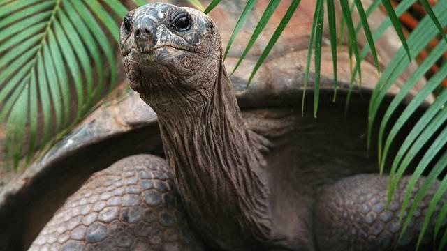 Über 60'000 Schildkröten werden jährlich in Madagaskar getötet (Symbolbild)