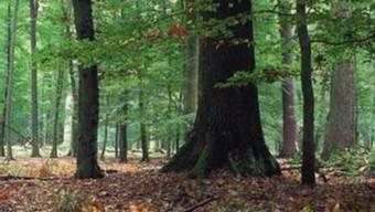 Vor 200 Jahren wurde der kantonale Forstdienst Solothurn gegründet – der Grundstein zur Rettung der Wälder. WOZLZB