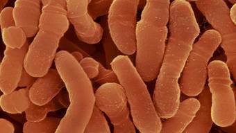 Bakterien sind überall.