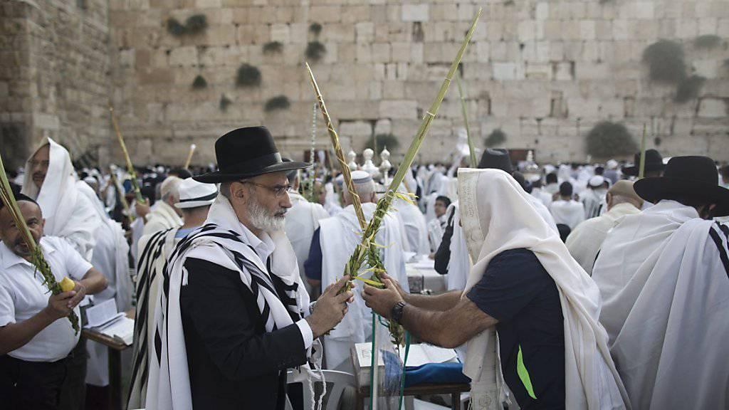 Orthodoxe Juden vor der Klagemauer bedecken sich den Kopf mit ihrem Gebetstuch und halten einen zu einem Feststrauss gebundenen Palmzweig in den Händen.