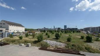 Seit 2007 entsteht auf dem Erlenmatt ein neues Stadtquartier.