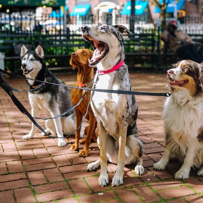 Dog Toilets - Der Robidog-Finder fürs Smartphone