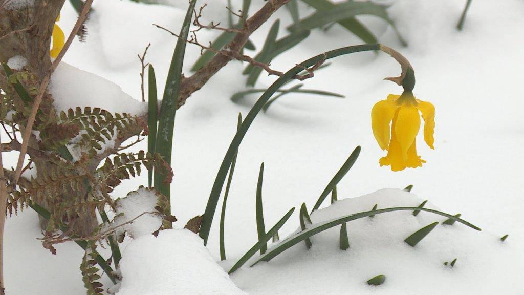 Der Winter stattet einen kurzen Besuch ab