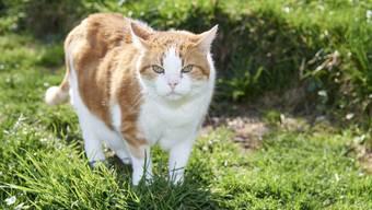 Weil immer wieder Katzen in den automatischen Lüftungsfenstern seiner Gewächshäuser eingeklemmt wurden und der Gärtner angeblich nichts dagegen unternahm, musste sich dieser vor Gericht verantworten. (Symbolbild)