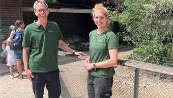 Wildpark ROggenhausen Minipigs 2019