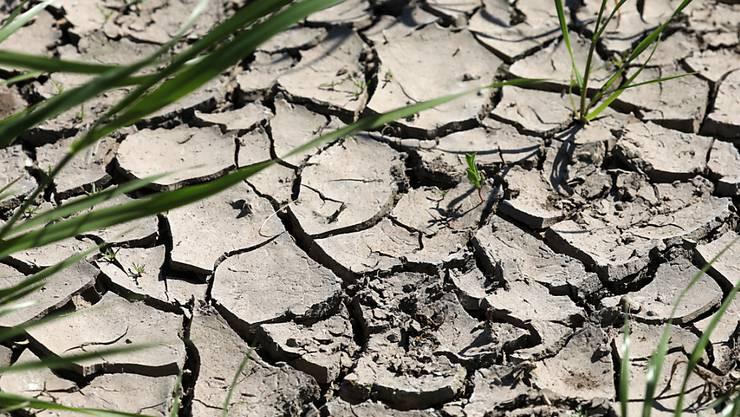Einer Studie zufolge nehmen extreme Dürreperioden in Mitteleuropa wohl zu.