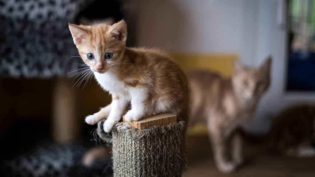 Bei Wohnungsräumung 40 Katzen gefunden