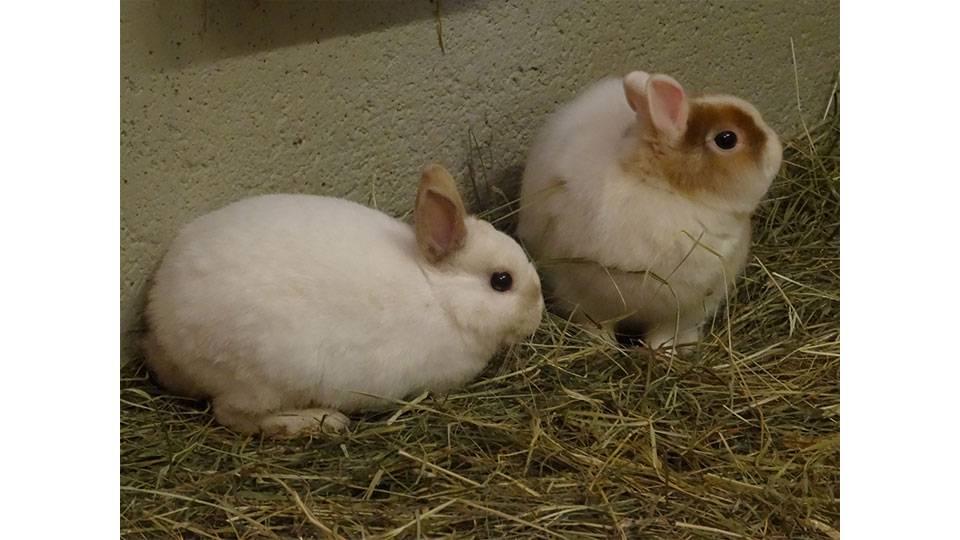 Lili und Mimi