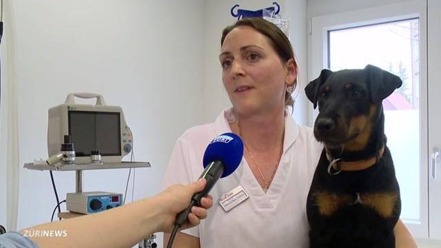 Hundehasser vergiftet erneut Vierbeiner