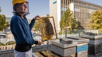 Ein Fabrikdach im Quartier Altstetten ist einer von zwölf Standorten, an denen Anna Hochreuteners Bienenvölker stationiert sind. Bild: Chris Iseli