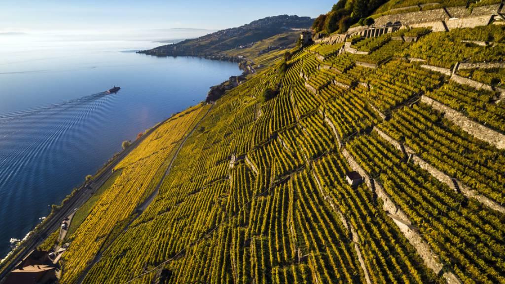 Umweltschützer wehren sich gegen ein geplantes Bauprojekt im Unesco-Weltkulturerbe Lavaux. Promotoren wollen im Weinbaugebiet Dézaley bei Puidoux Luxuswohnungen bauen.