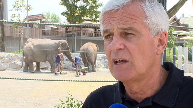 Elefantendame Sumatra gestorben