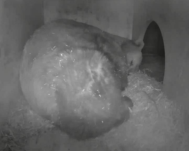 Napa verbringt die meiste Zeit in seinem Stall und schläft.