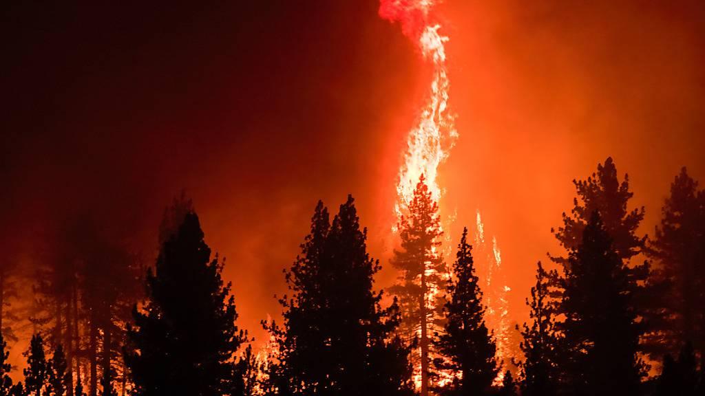 Flammen umschlingen Bäume während des Tamarack Feuers. Foto: Ty O'neil/SOPA Images via ZUMA Press Wire/dpa