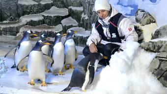 Pinguine im Sealife