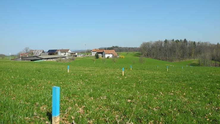 Auf dieser Wiese beim Weiler Eichwald möchte die Nagra Sondierbohrungen für ein Tiefenlager für Atommüll durchführen. Marc Fischer