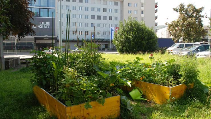 Urban Farming in Schlieren