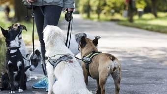 Hunde nehmen Mimik und Tonfall eines Menschen als Zeichen für seine Gefühlslage wahr. (Archiv)