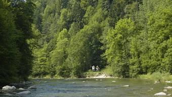 Der Wildnispark Zürich Sihlwald besteht aus einer Kernzone für die natürliche Entwicklung des Waldes sowie einer «besucherfreundlicheren» Naturerholungszone. (Archivbild)
