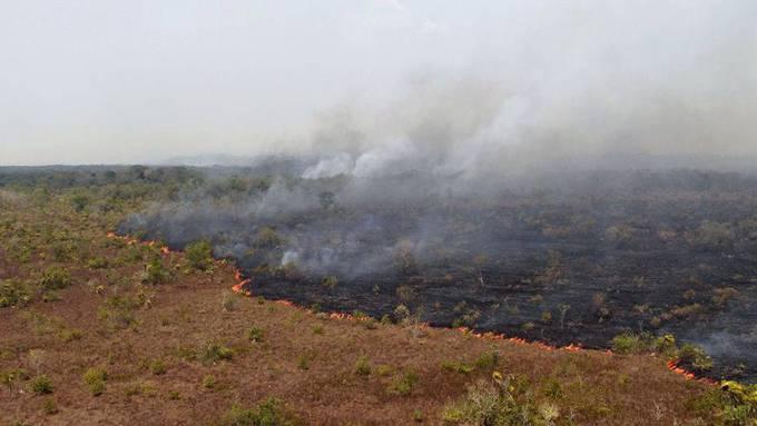 Die Lunge der Welt brennt: Fünf Bilder, die zeigen, wie verheerend die Brände im Amazonas sind
