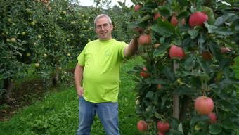 Othmar Strebel inmitten seiner Apfelplantage: «Der trockene, heisse Sommer führt zu einem hohen Ertrag und zu einer hervorragenden Qualität».