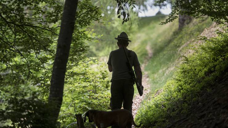 Ständeratskandidaten nehmen Stellung zum Jagdgesetz. (Symbolbild)
