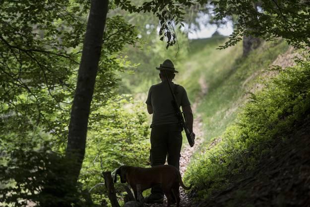 Jährlich werden im Kanton Solothurn rund 2000 Rehe erlegt, rund 100 Gämsen sowie 400 Stück Schwarzwild. Die meisten der geschossenen Rehe werden dabei auf der so genannten Bewegungsjagd erlegt – die Jägerinnen und Jäger sitzen also weder auf einem Ansitz noch liegen sie auf der Pirsch. Mit der Wildjagd wird für einen regulierten Wildbestand gesorgt. Der Auftrag der Jägerinnen und Jäger ist es,die Wildpopulation in den stark besiedelten Waldgebieten in Grenzen zu halten. (Quelle: Kanton Solothurn)