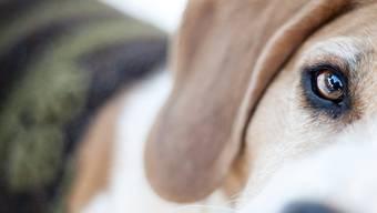 Verängstigte Hunde bellen oft. Für Nestlé sind sie ein lukratives Geschäft.