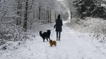 Auf dem Winterspaziergang im Wald: Ab April müssen Hunde in den Solothurner Wäldern an die Leine genommen werden.