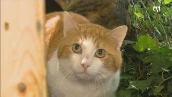 Verwilderte Katze im Haus der verstorbenen Besitzerin.