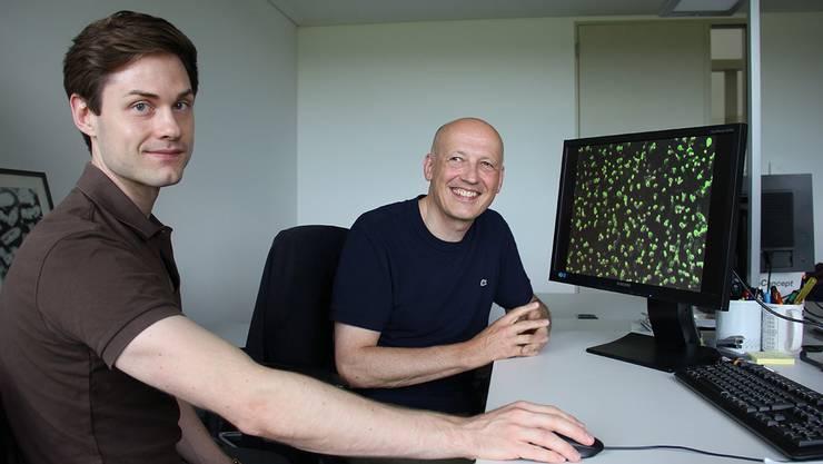 Ferdinand Zettl und Gert Zimmer vom Institut für Virologie und Immunologie vor einer Aufnahme des von ihnen entwickelten Tests mit grün fluoreszierenden Zellen.