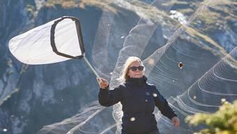Schweizer Forschwer Schmetterlinge