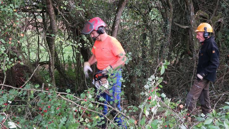 Bei der Vorarbeit werden Bäume zerlegt. Die Äste werden zerkleinert und der Hecke zurückgegeben.