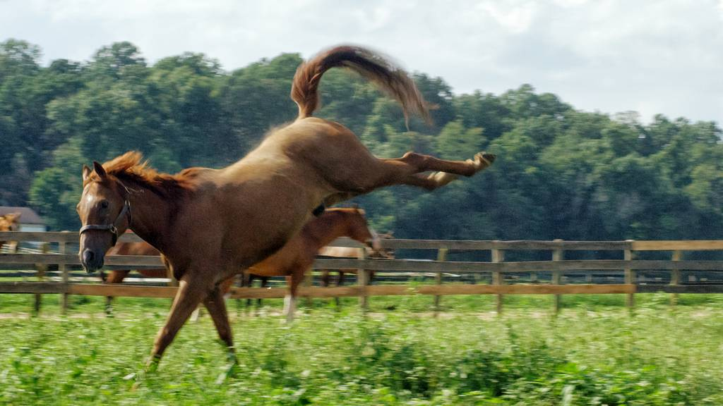 10-jähriges Mädchen wird von Pferd getreten und stirbt