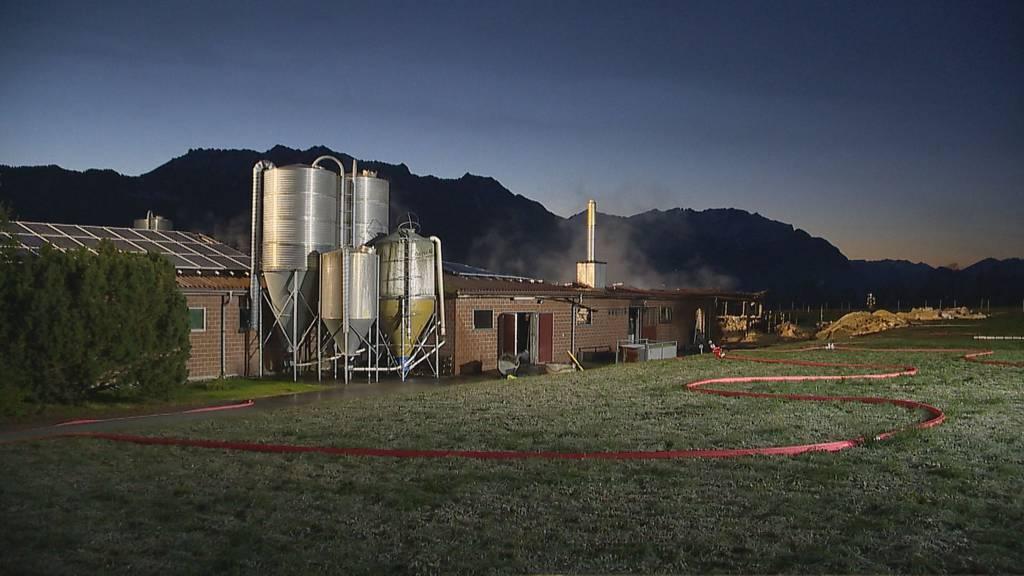 400 Schweine tot - Brandursache noch nicht ermittelt
