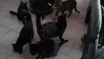 Die Katzen wurden in Suhr vor einem Block in einer zugeklebten Schachtel ausgesetzt.